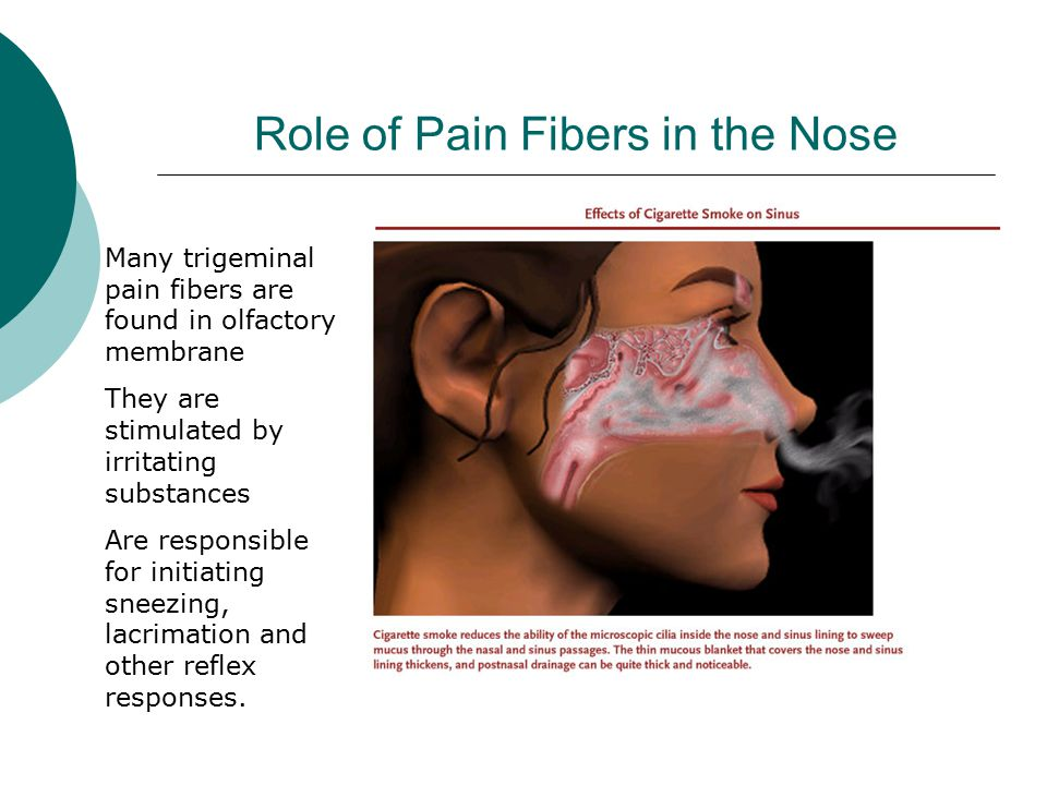Role of Pain Fibers in the Nose