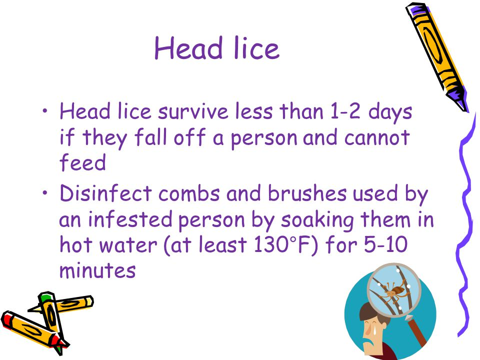 Head lice Head lice survive less than 1-2 days if they fall off a person and cannot feed.