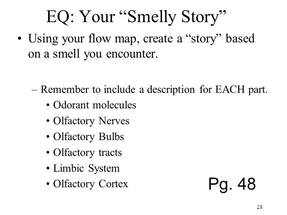 EQ: Your Smelly Story