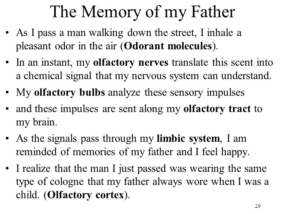 The Memory of my Father As I pass a man walking down the street, I inhale a pleasant odor in the air (Odorant molecules).