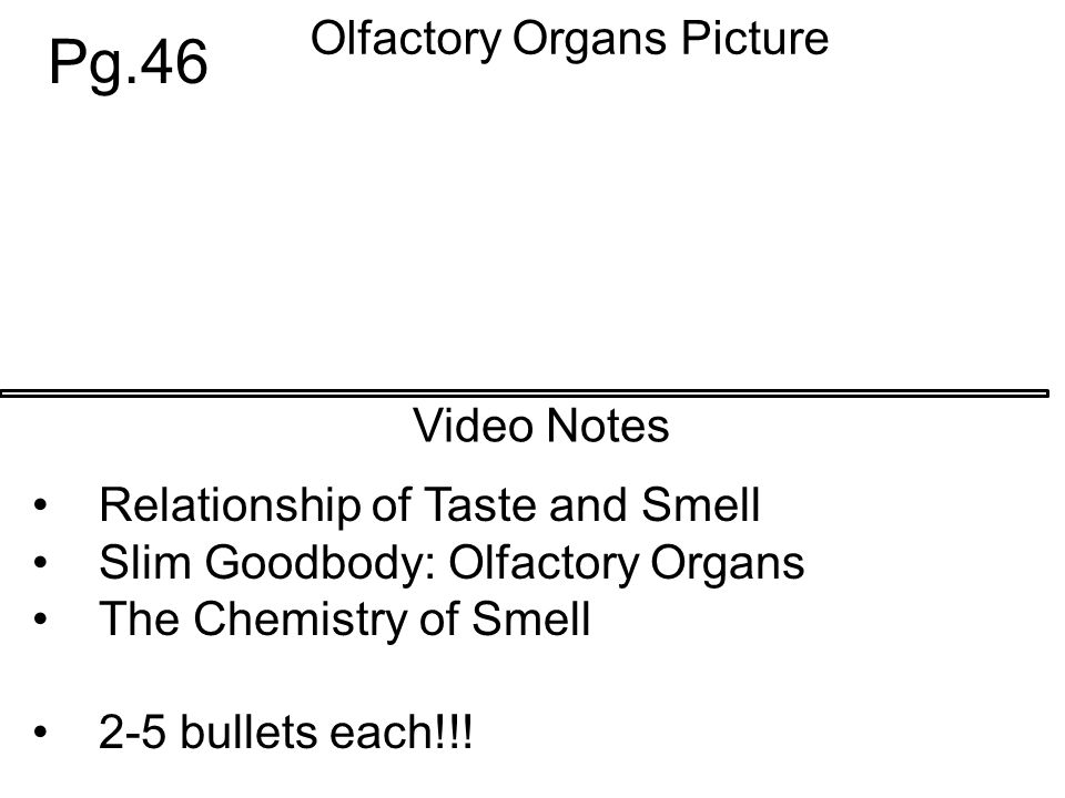 Olfactory Organs Picture