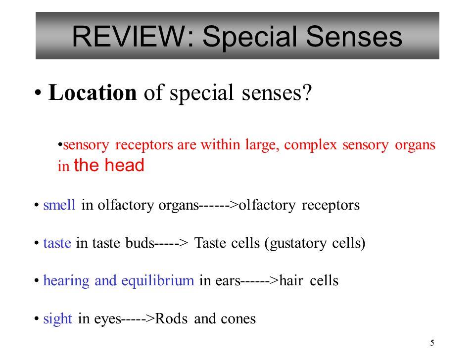 REVIEW: Special Senses