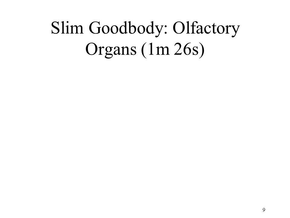 Slim Goodbody: Olfactory Organs (1m 26s)
