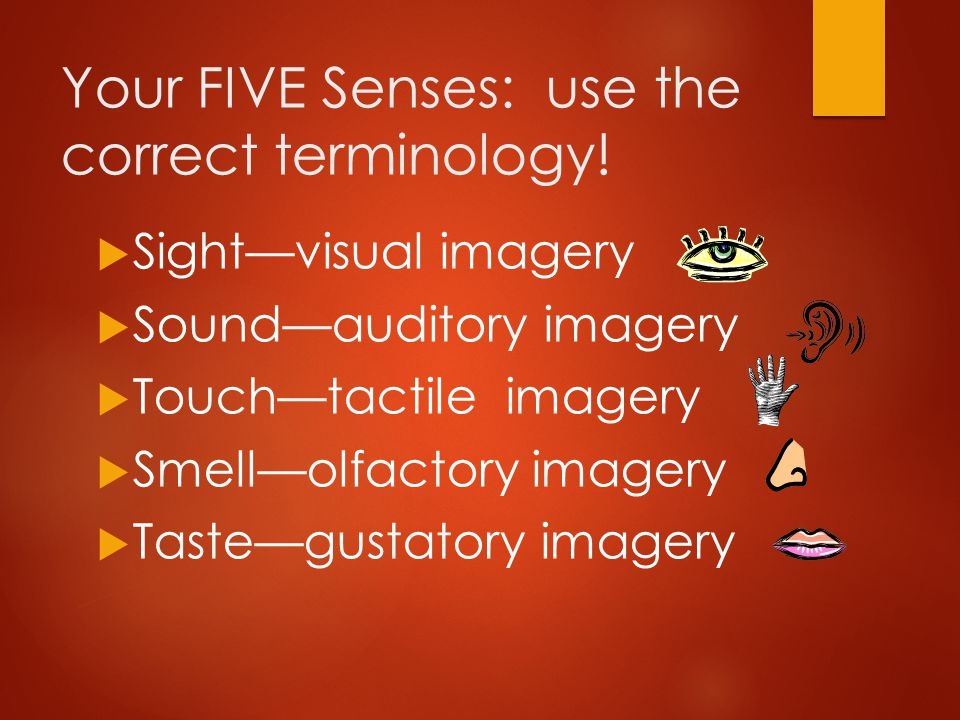 Your FIVE Senses: use the correct terminology!