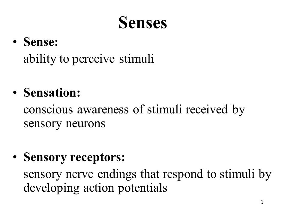 Senses Sense: ability to perceive stimuli Sensation: