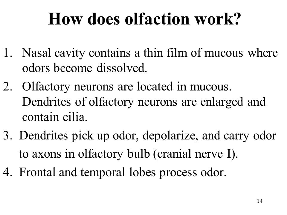 How does olfaction work