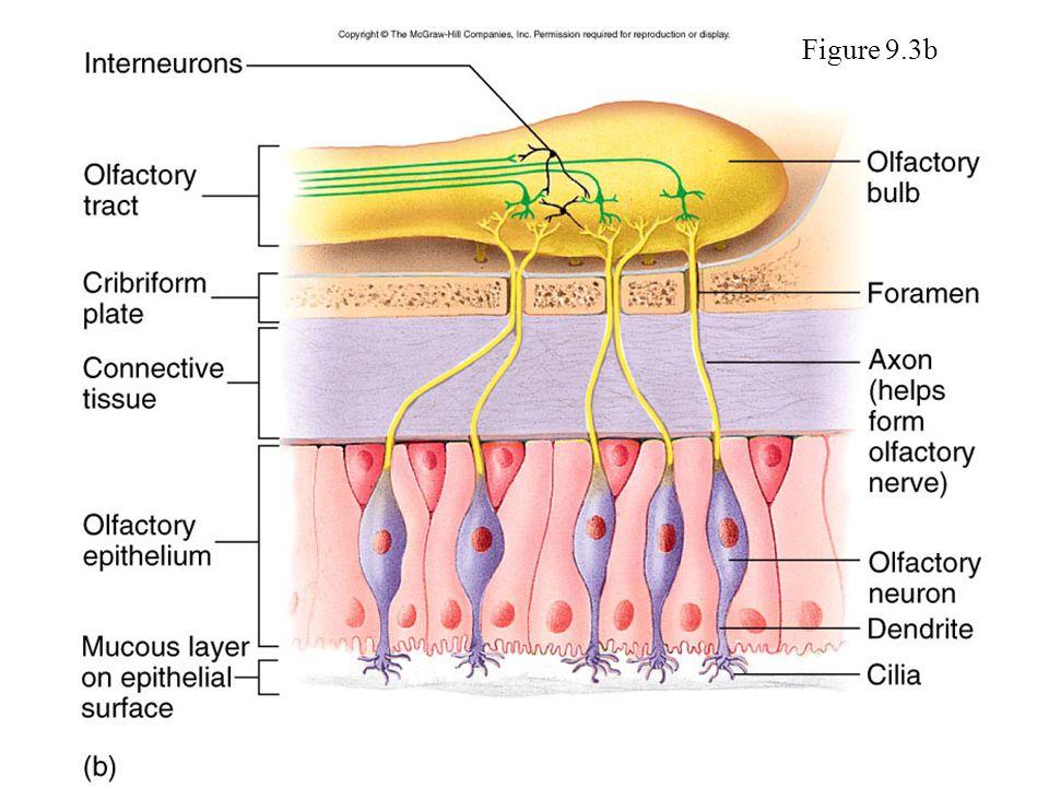 Figure 9.3b