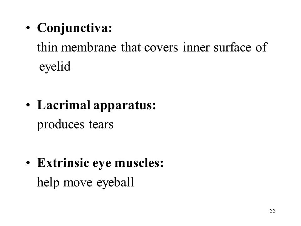 Conjunctiva: thin membrane that covers inner surface of. eyelid. Lacrimal apparatus: produces tears.