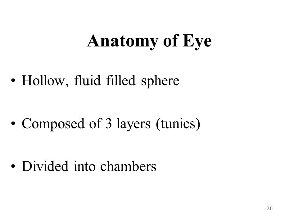 Anatomy of Eye Hollow, fluid filled sphere