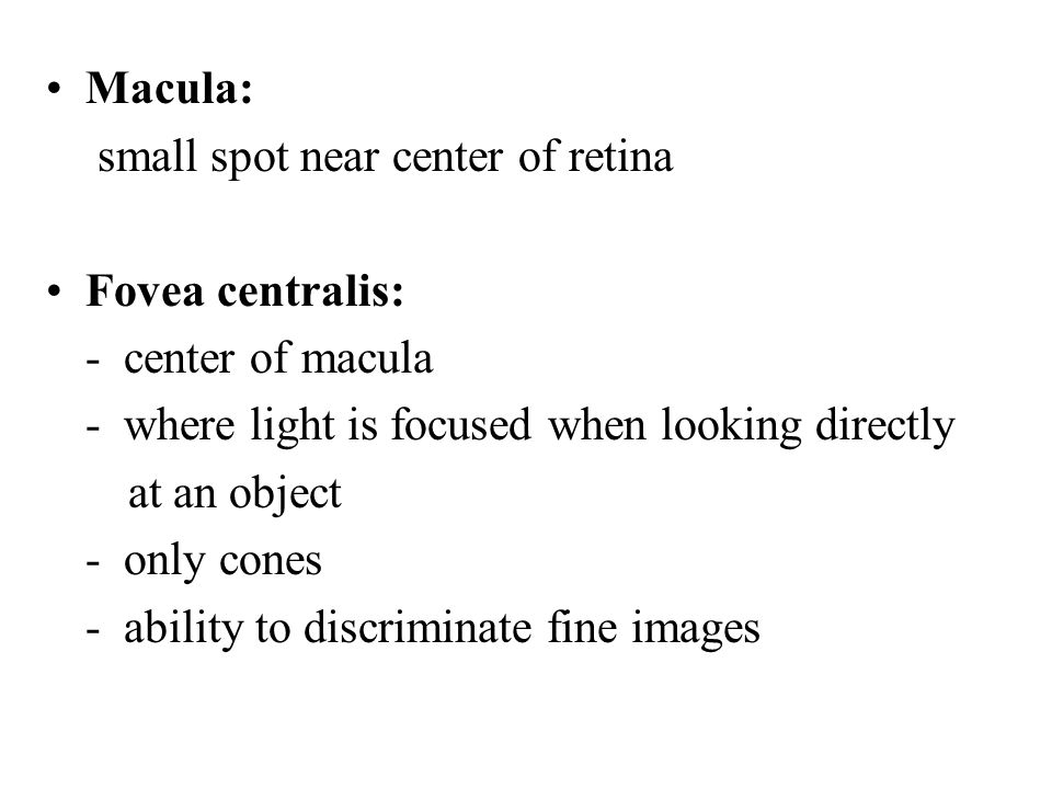 Macula: small spot near center of retina. Fovea centralis: - center of macula. - where light is focused when looking directly.