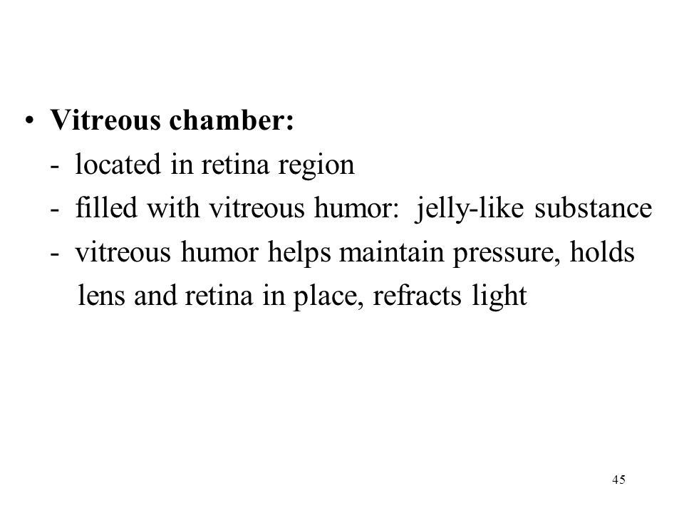 Vitreous chamber: - located in retina region. - filled with vitreous humor: jelly-like substance.