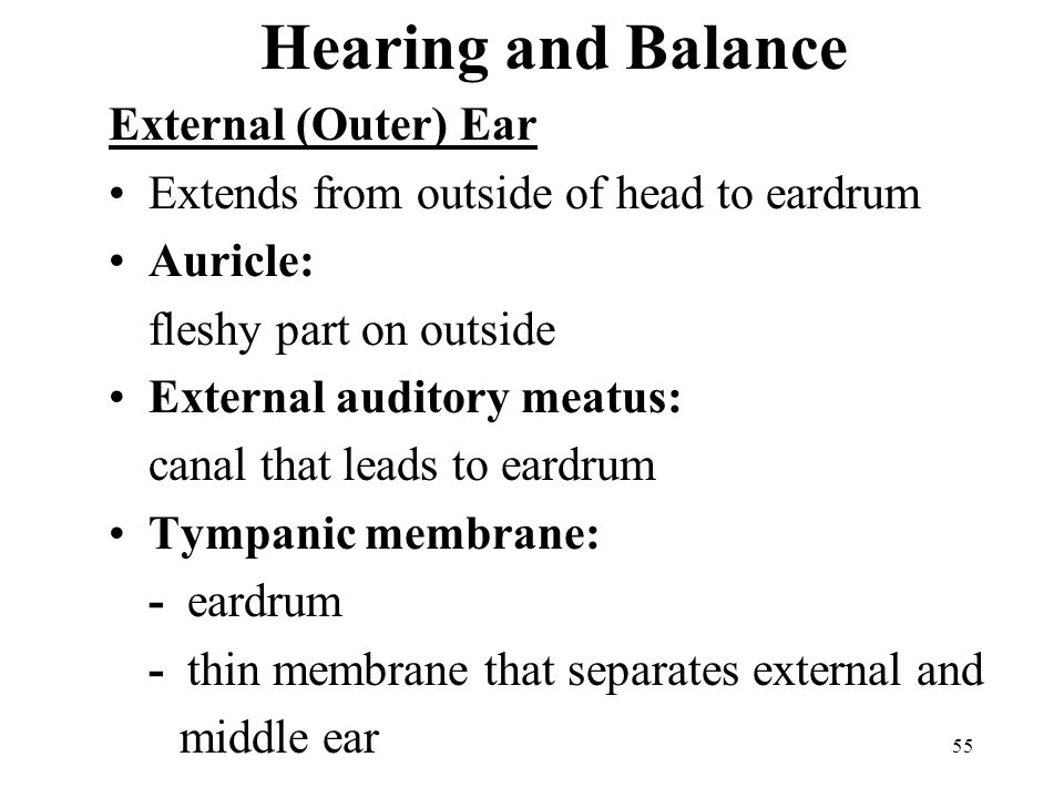 Hearing and Balance External (Outer) Ear
