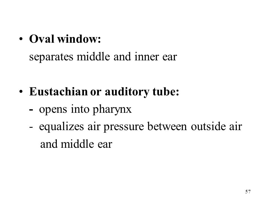 Oval window: separates middle and inner ear. Eustachian or auditory tube: - opens into pharynx. - equalizes air pressure between outside air.