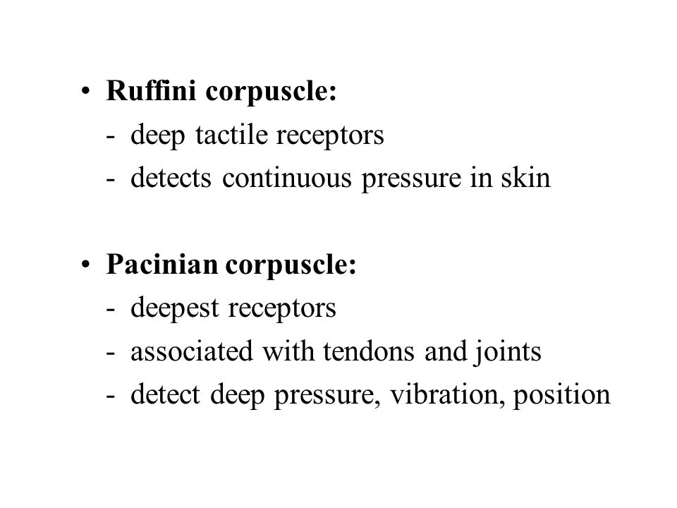 Ruffini corpuscle: - deep tactile receptors. - detects continuous pressure in skin. Pacinian corpuscle: