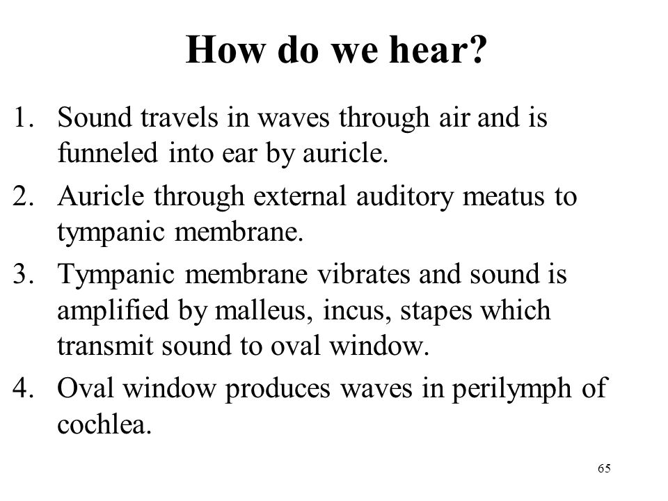 How do we hear Sound travels in waves through air and is funneled into ear by auricle.