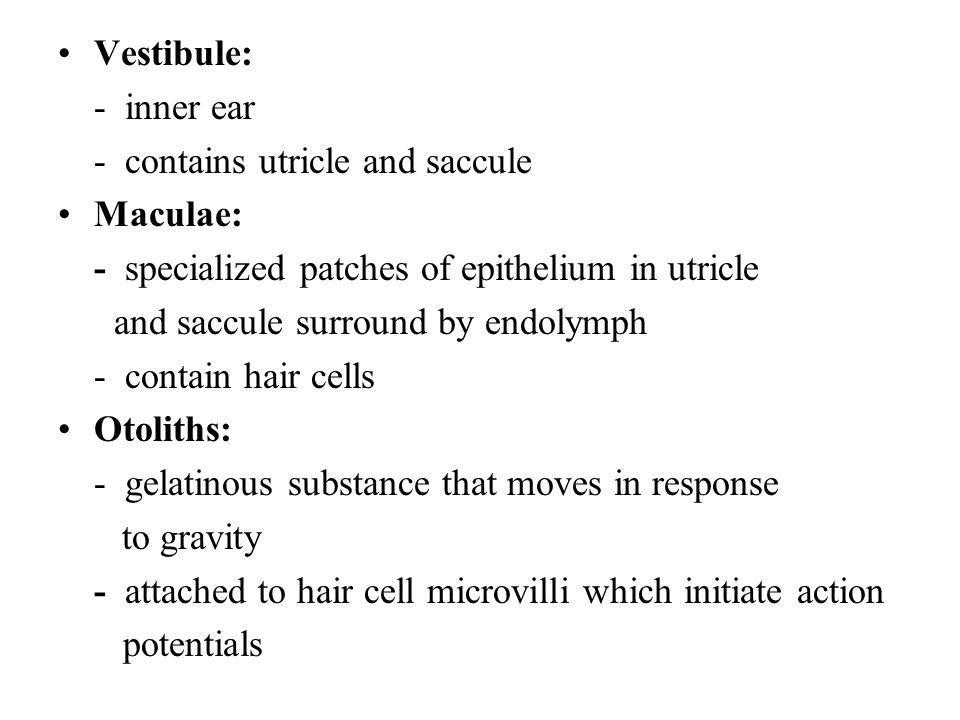 Vestibule: - inner ear. - contains utricle and saccule. Maculae: - specialized patches of epithelium in utricle.