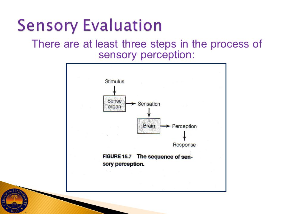 There are at least three steps in the process of sensory perception:
