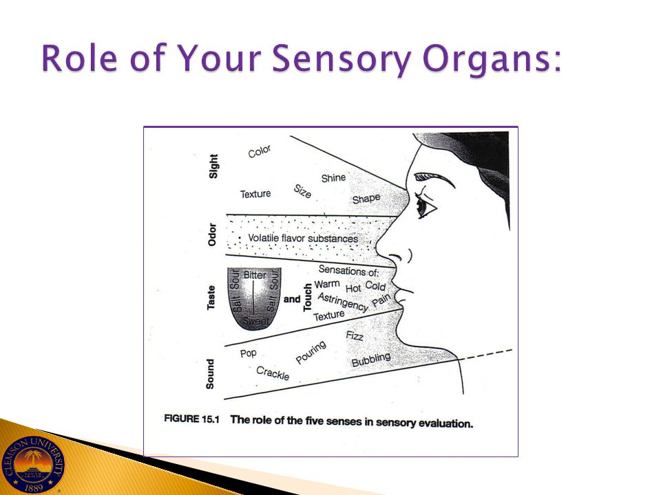 Role of Your Sensory Organs: