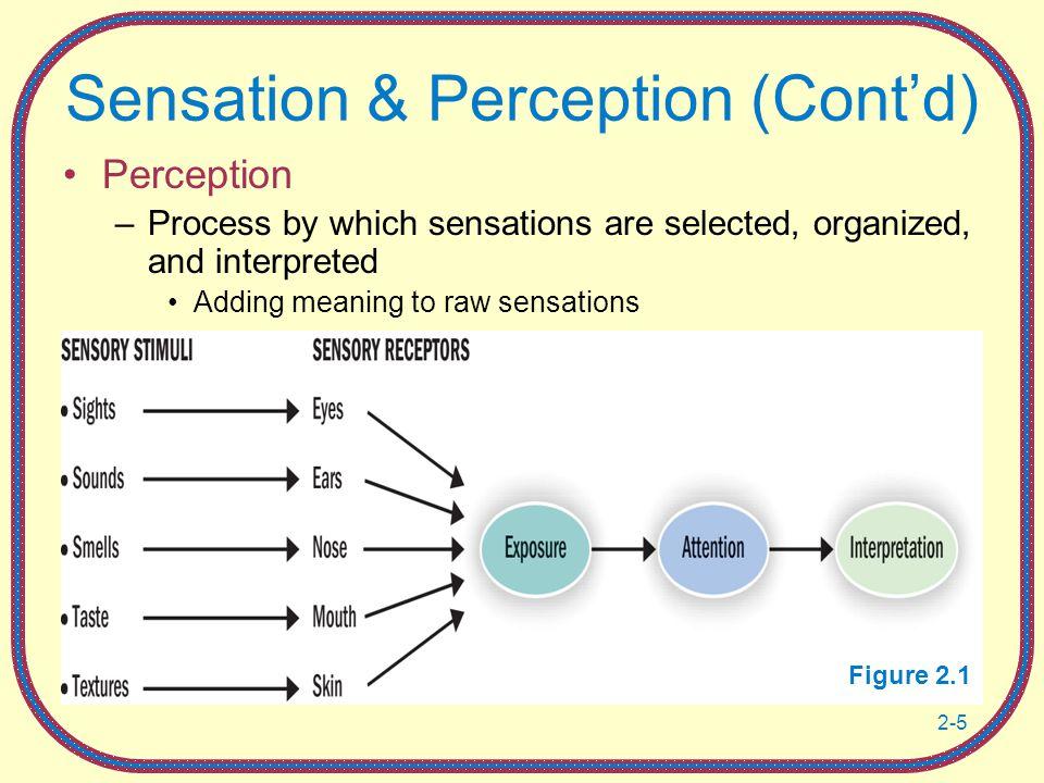 Sensation & Perception (Cont'd)