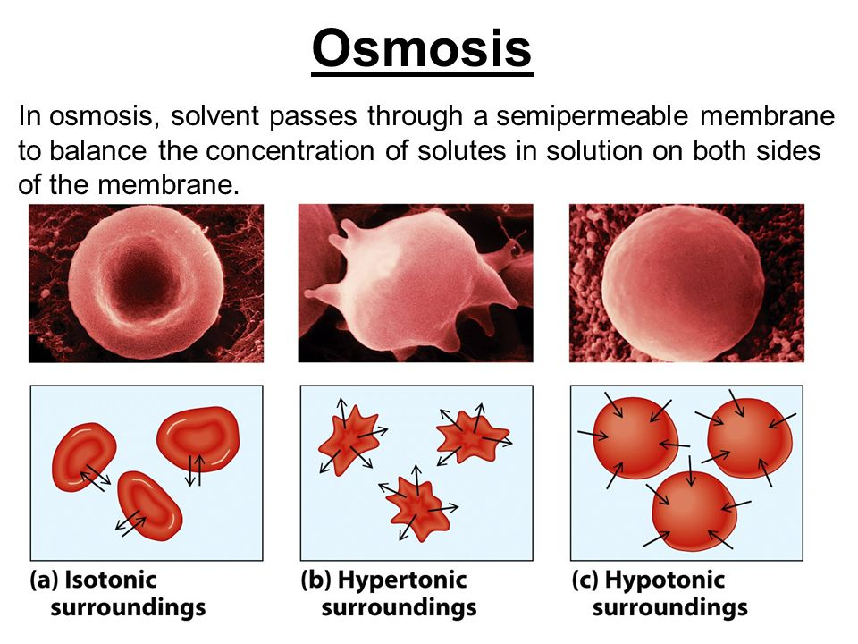 Osmosis In osmosis, solvent passes through a semipermeable membrane