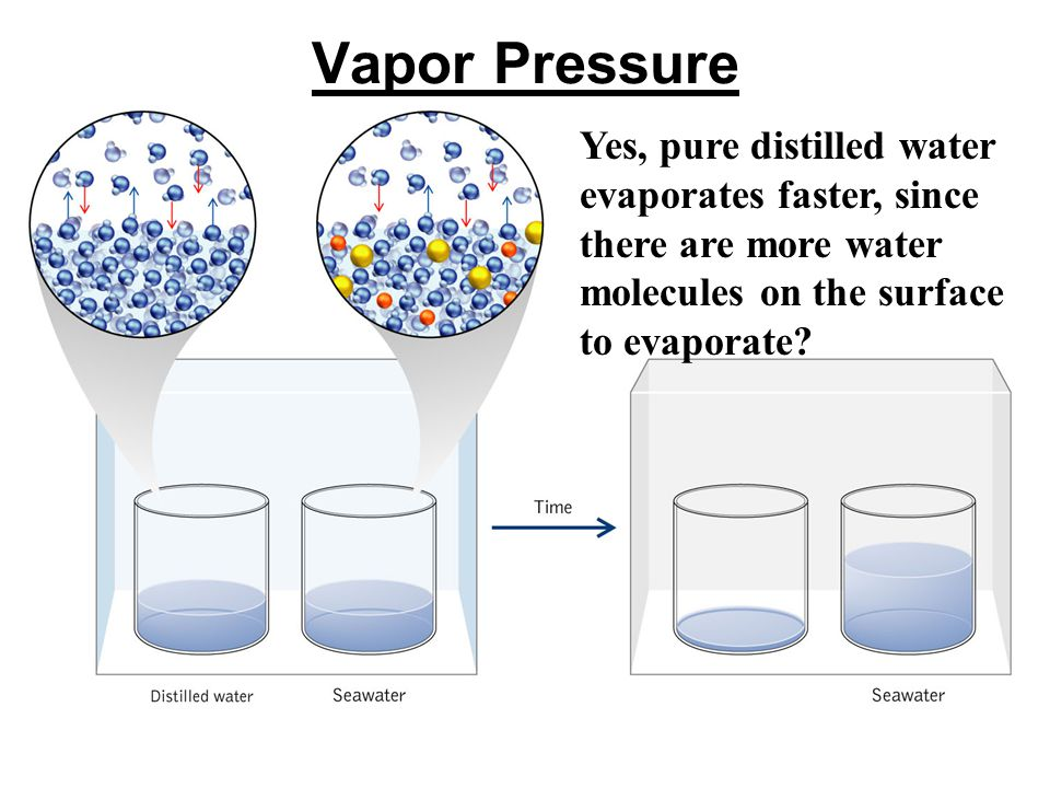 Vapor Pressure Yes, pure distilled water evaporates faster, since there are more water molecules on the surface to evaporate