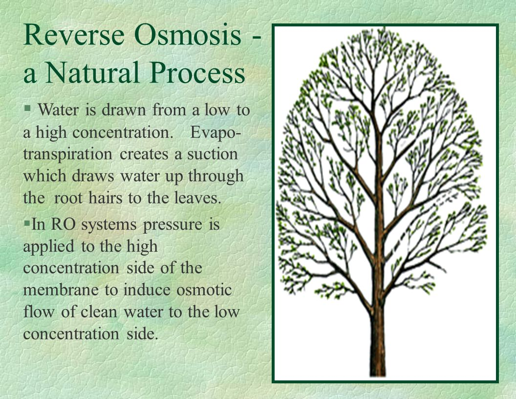 Reverse Osmosis - a Natural Process