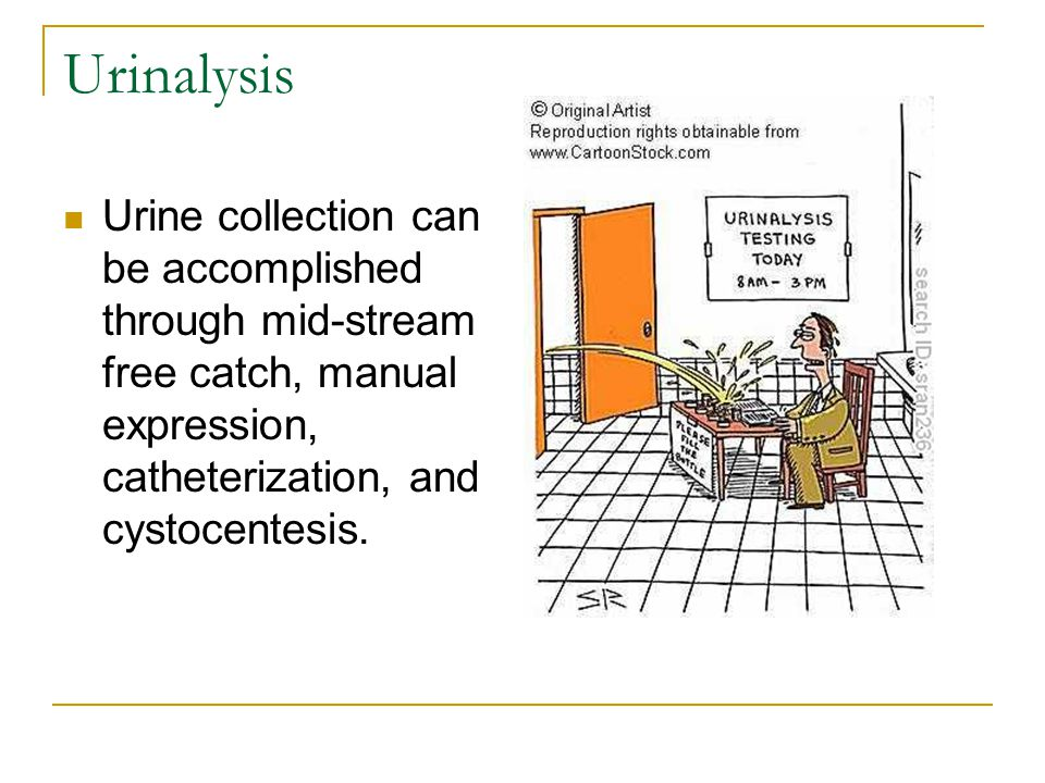 Urinalysis Urine collection can be accomplished through mid-stream free catch, manual expression, catheterization, and cystocentesis.