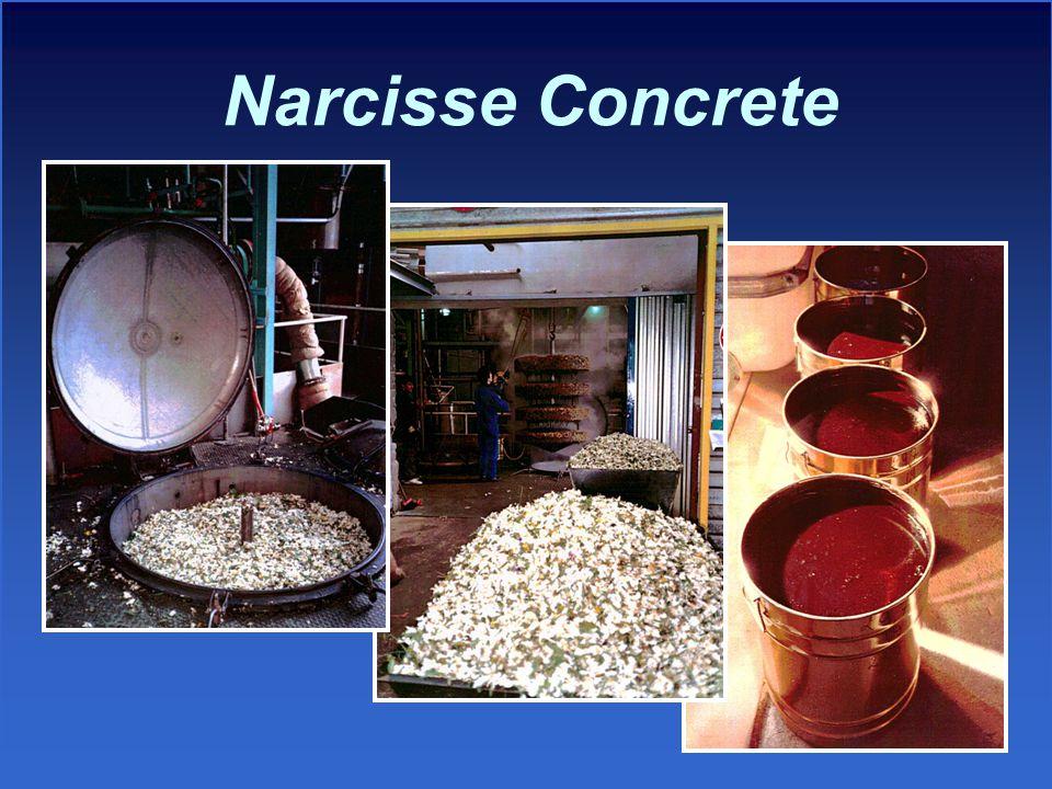 Narcisse Concrete
