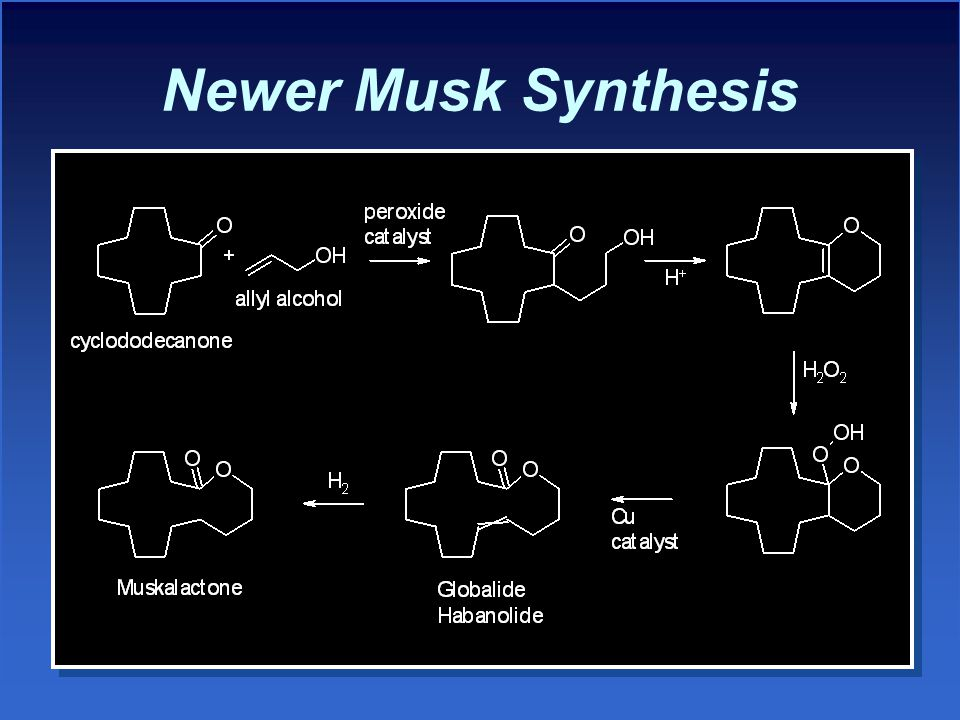 Newer Musk Synthesis