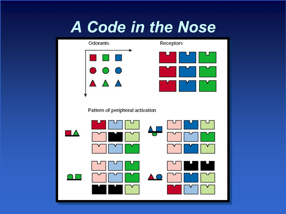 A Code in the Nose