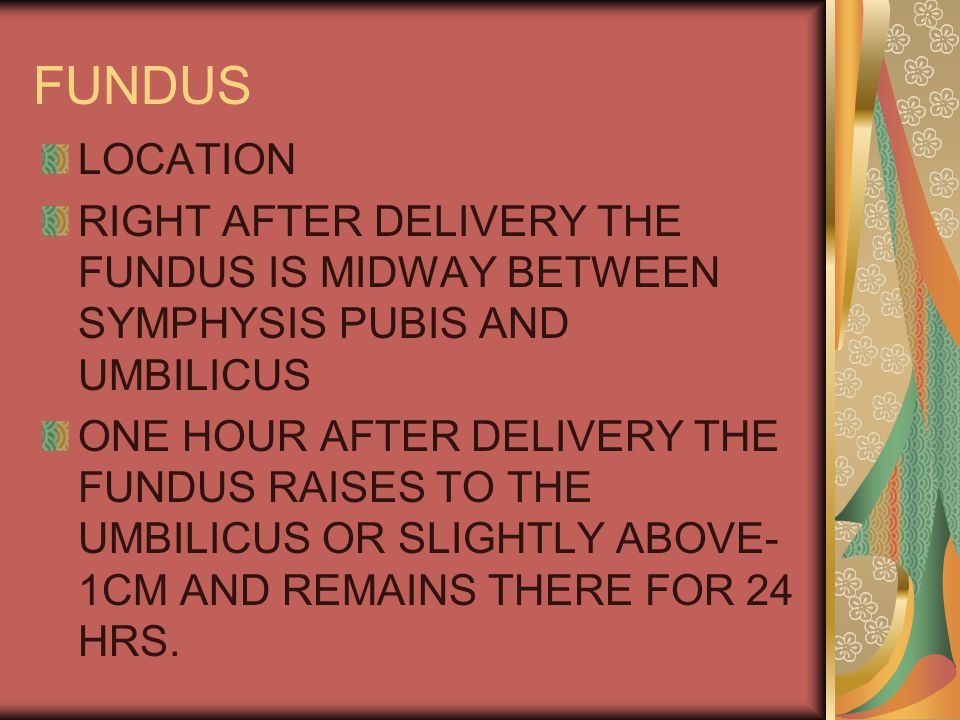 FUNDUS LOCATION. RIGHT AFTER DELIVERY THE FUNDUS IS MIDWAY BETWEEN SYMPHYSIS PUBIS AND UMBILICUS.