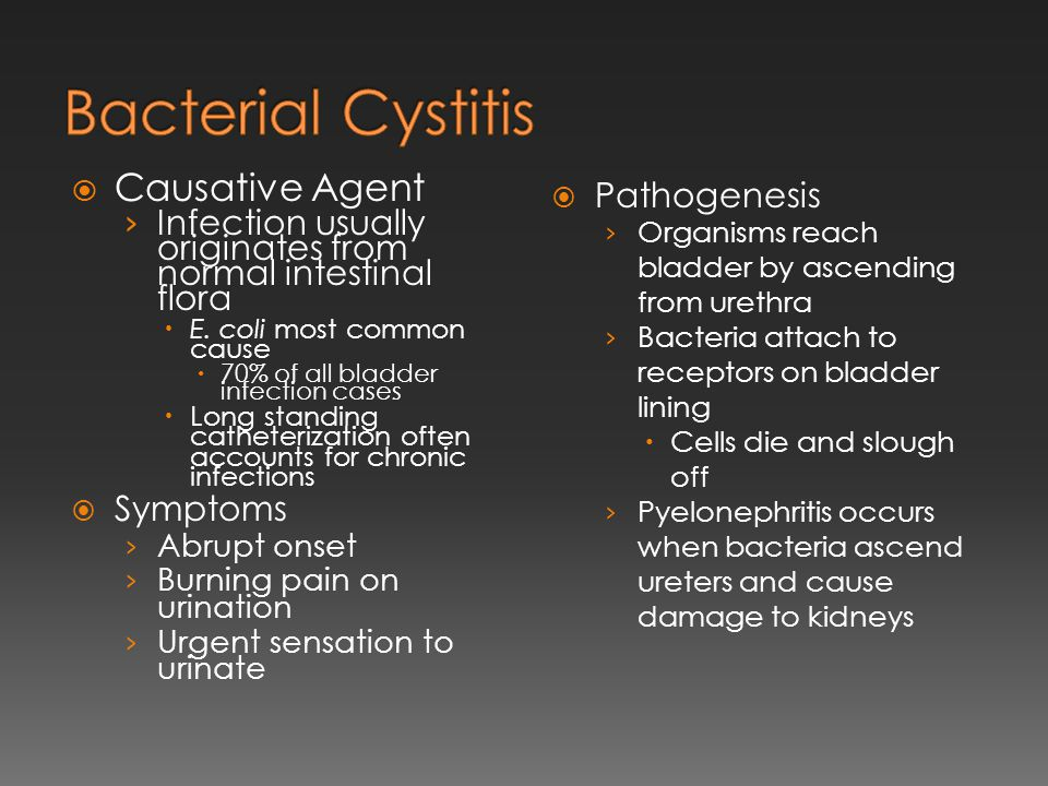 Bacterial Cystitis Causative Agent Pathogenesis