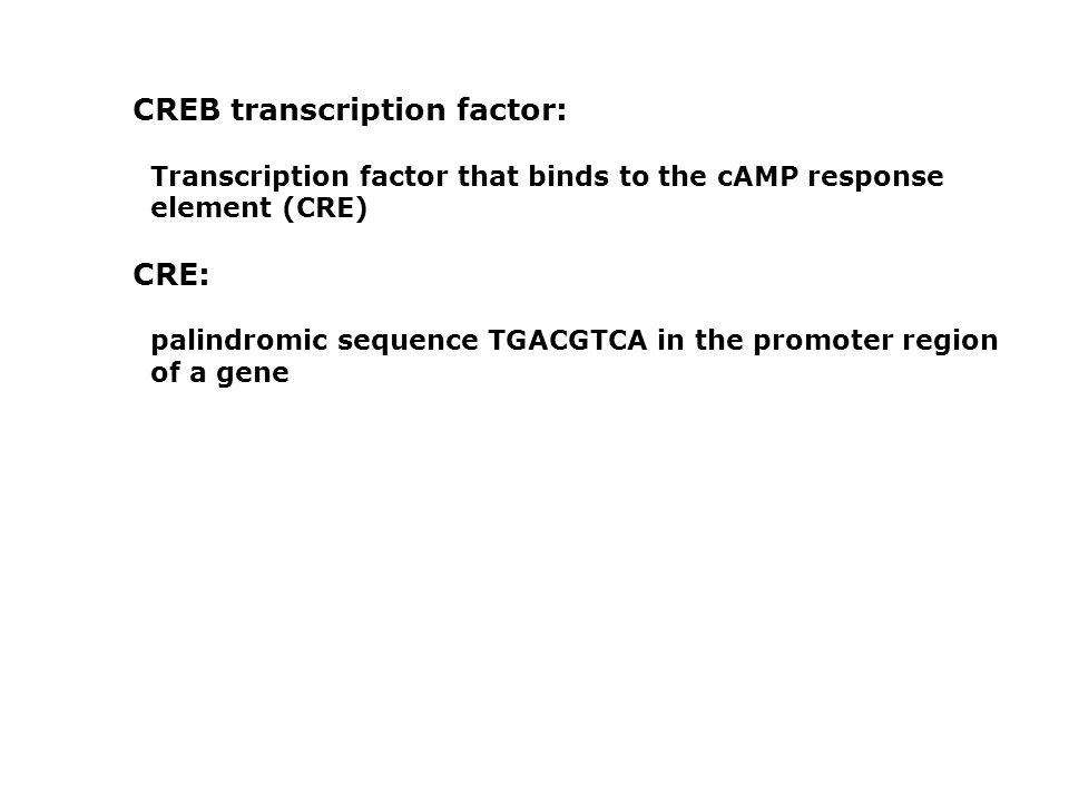 CREB transcription factor:
