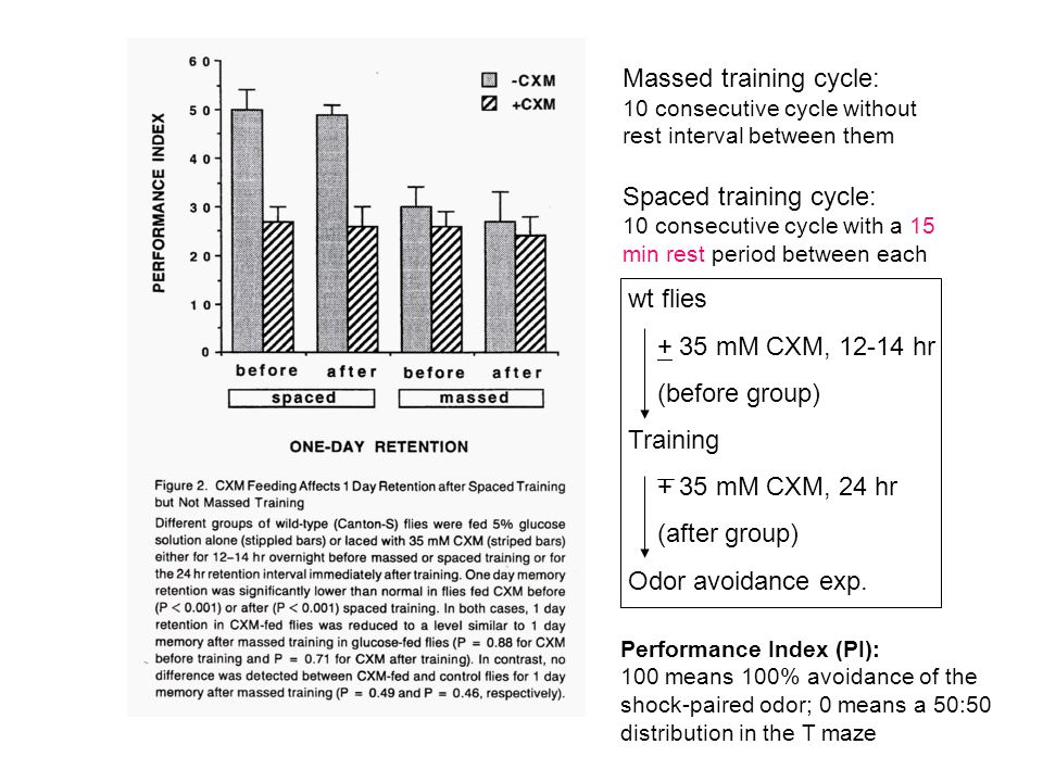 Massed training cycle: