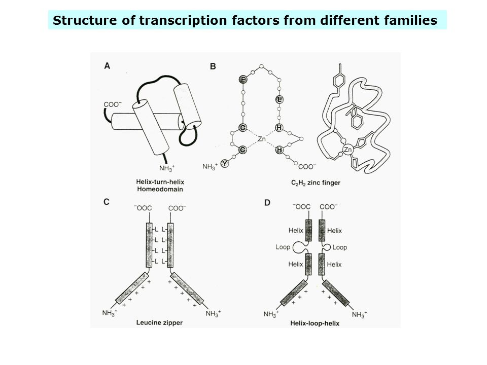 Structure of transcription factors from different families