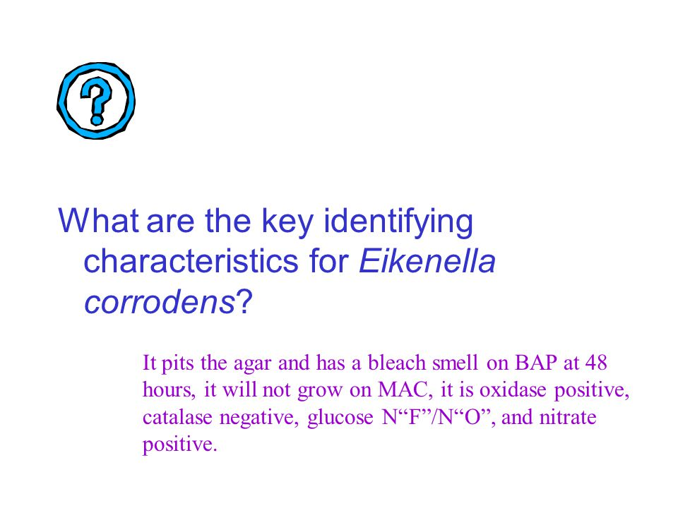 What are the key identifying characteristics for Eikenella corrodens