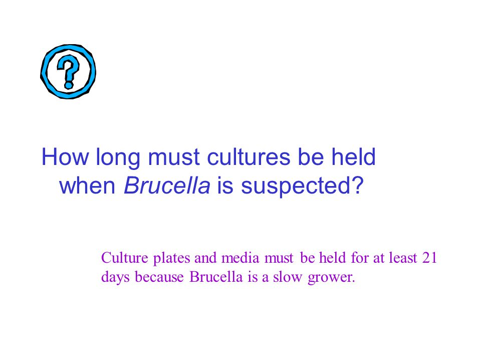 How long must cultures be held when Brucella is suspected