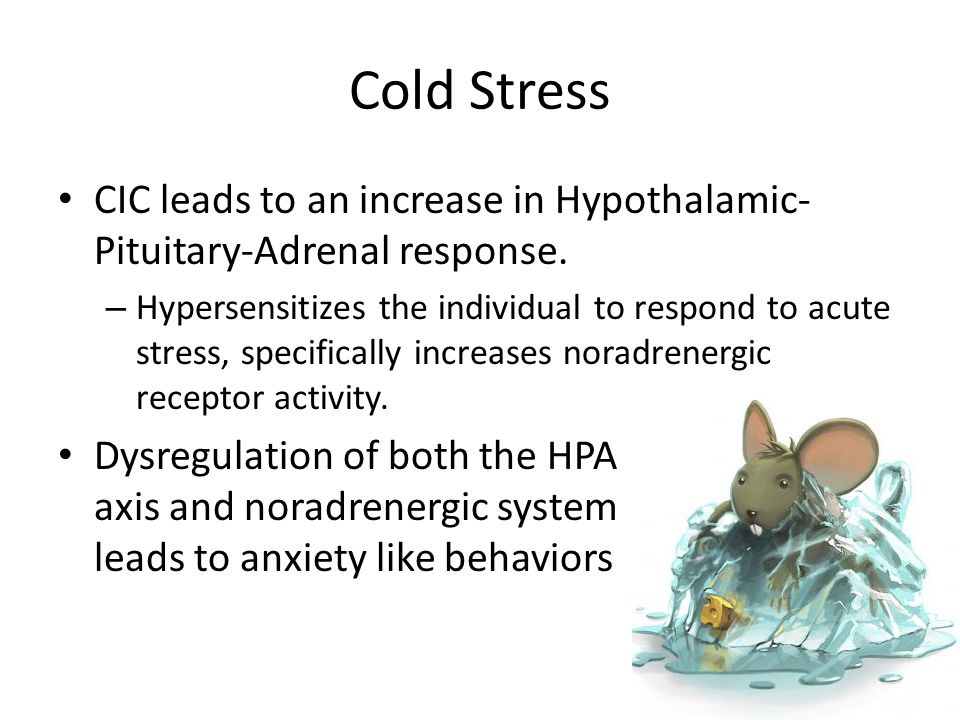 Cold Stress CIC leads to an increase in Hypothalamic-Pituitary-Adrenal response.