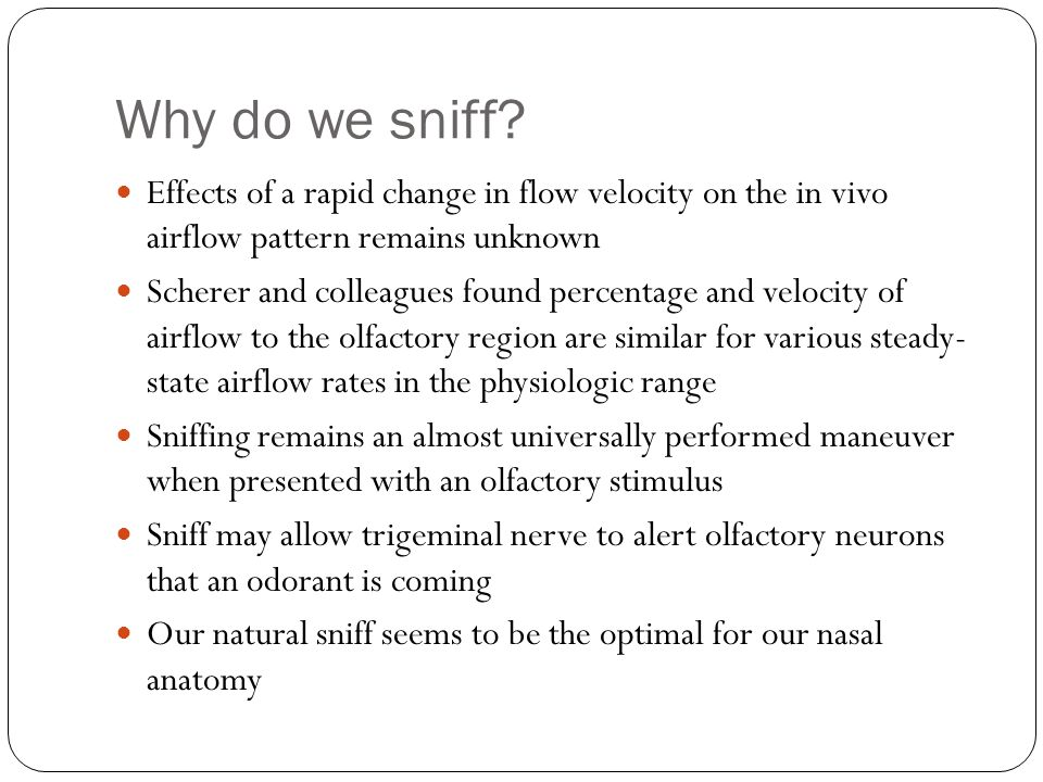 Why do we sniff Effects of a rapid change in flow velocity on the in vivo airflow pattern remains unknown.