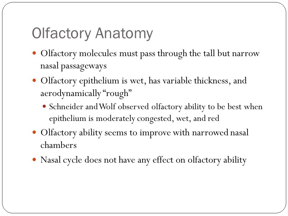 Olfactory Anatomy Olfactory molecules must pass through the tall but narrow nasal passageways.