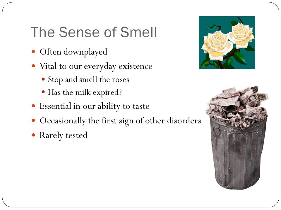 The Sense of Smell Often downplayed Vital to our everyday existence