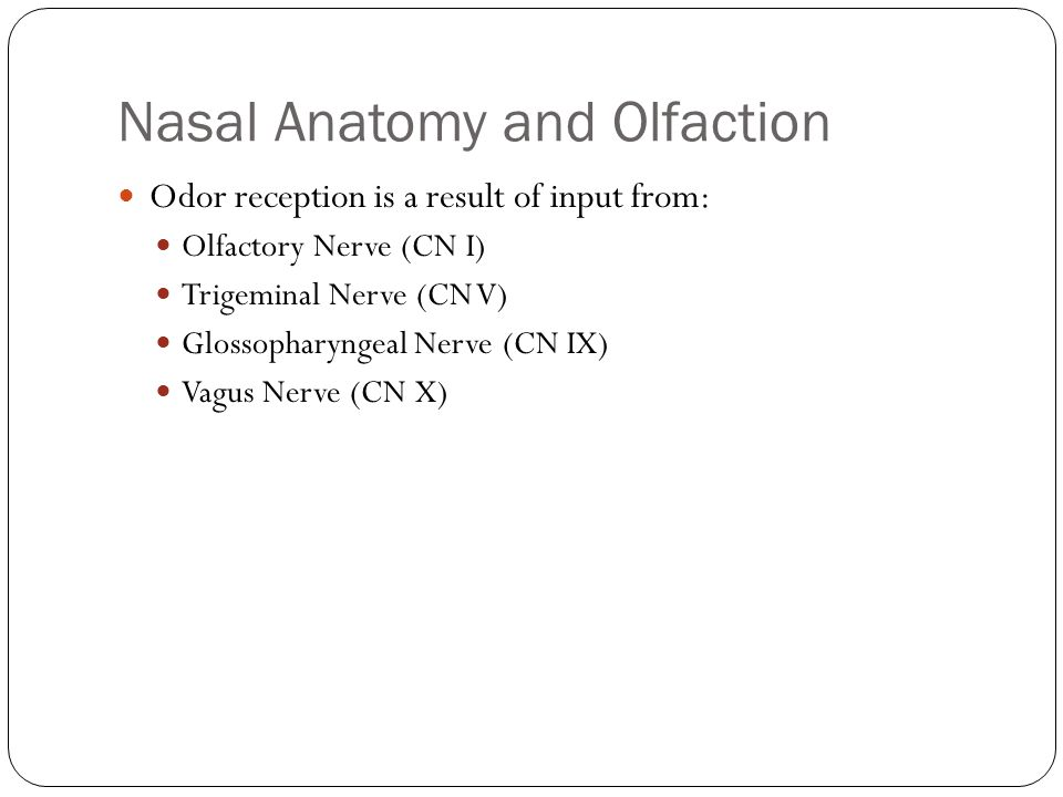 Nasal Anatomy and Olfaction