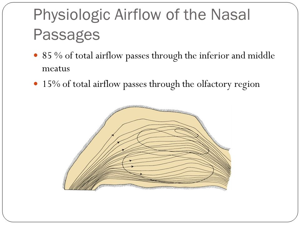 Physiologic Airflow of the Nasal Passages