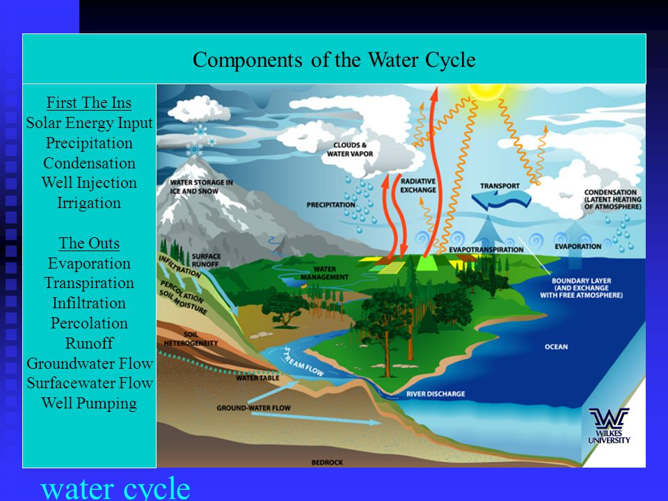 Components of the Water Cycle