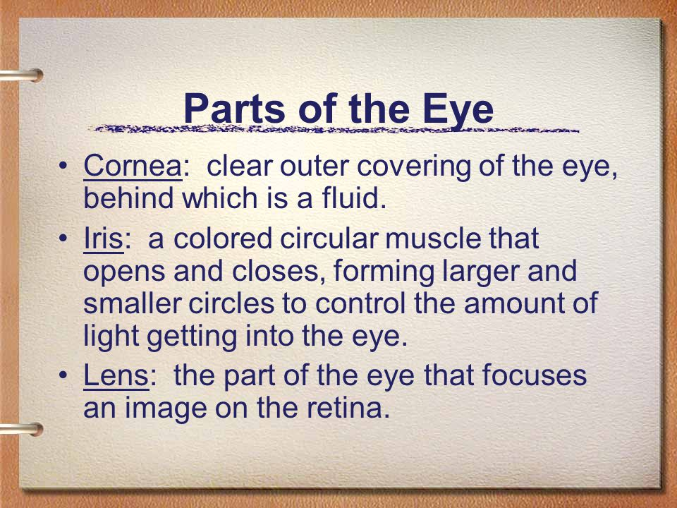 Parts of the Eye Cornea: clear outer covering of the eye, behind which is a fluid.