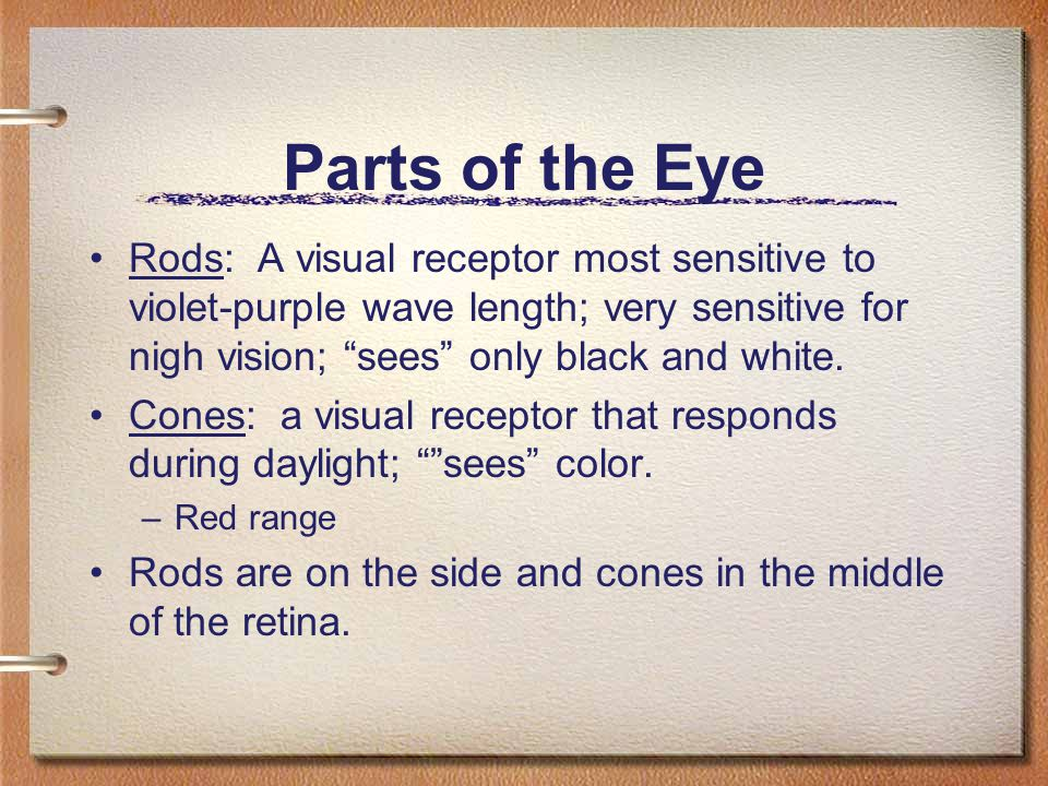Parts of the Eye Rods: A visual receptor most sensitive to violet-purple wave length; very sensitive for nigh vision; sees only black and white.