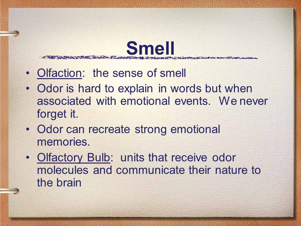 Smell Olfaction: the sense of smell