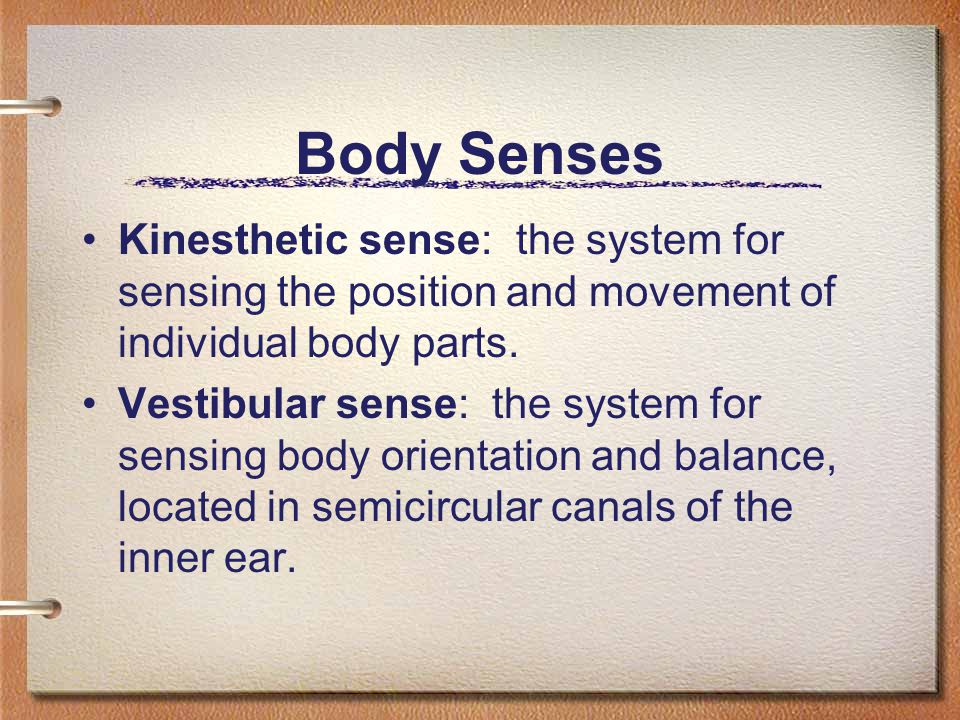 Body Senses Kinesthetic sense: the system for sensing the position and movement of individual body parts.