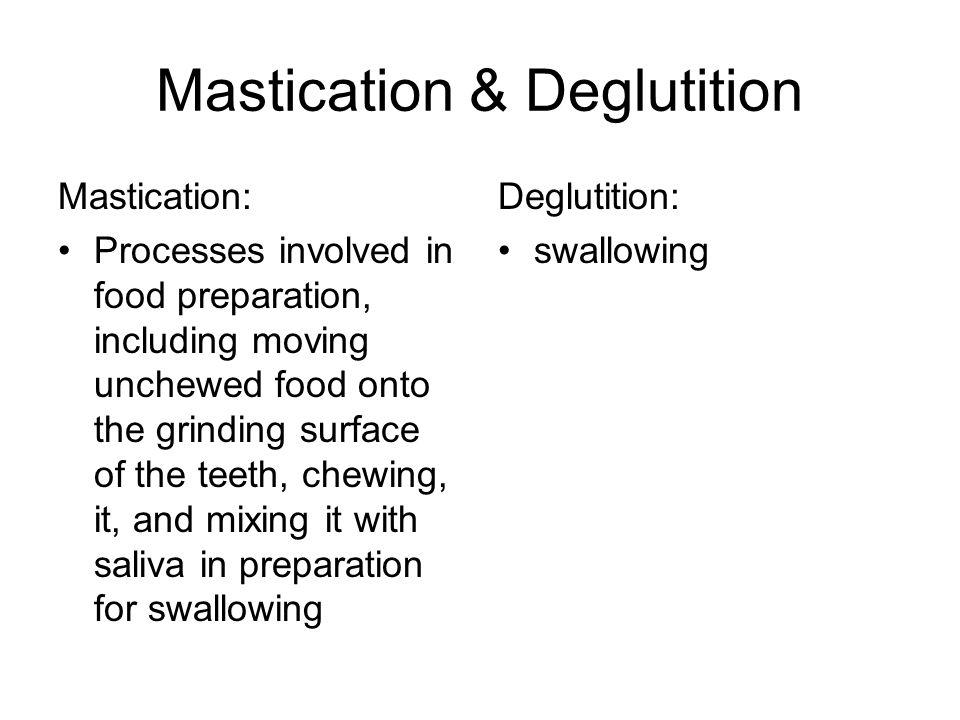 Mastication & Deglutition