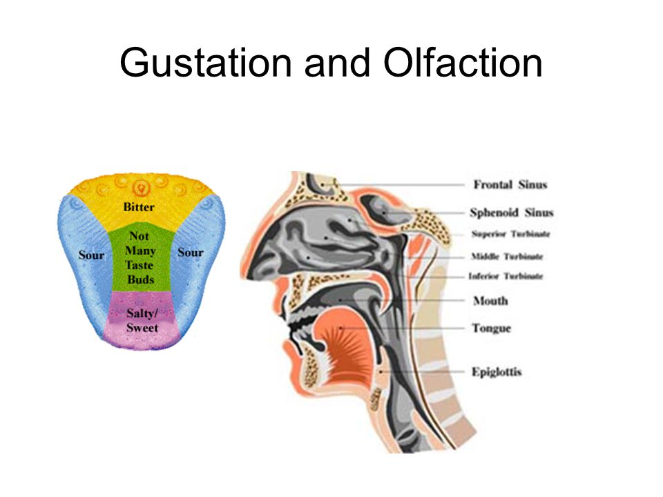 Gustation and Olfaction